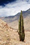 Garganta Cotahuasi, Peru foto de stock