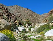 Garganta da palma, deserto de Anza-Borrego Fotos de Stock Royalty Free