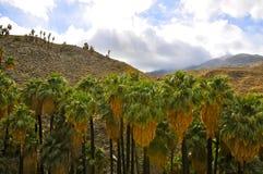 Garganta da palma, Palm Springs fotos de stock royalty free