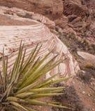 Garganta da rocha e planta vermelhas da mandioca, Nevada Foto de Stock Royalty Free