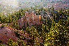 Garganta de Bryce com formação de pedra e árvores Fotos de Stock Royalty Free