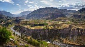 A garganta de Colca no Peru - vista de campos e de rio terraced de Colca Imagem de Stock