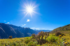 Garganta de Colca, Peru imagem de stock