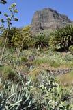 Garganta de Masca, Tenerife, Espanha foto de stock royalty free