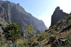 Garganta de Masca, Tenerife, Espanha imagem de stock royalty free