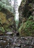Garganta de Oneonta, Oregon Fotografía de archivo libre de regalías