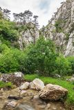Garganta de Tasnei, Rumania fotos de archivo
