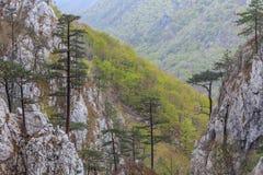 Garganta de Tasnei, Rumania Fotografía de archivo libre de regalías