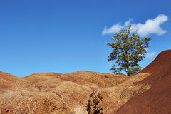 Garganta de Waimea, Kauai fotografia de stock royalty free