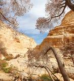 Garganta do deserto Fotos de Stock Royalty Free