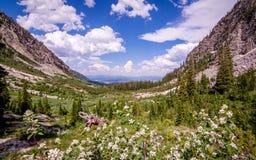 Garganta grande do pincel do parque nacional de Teton Imagem de Stock