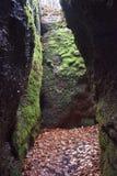 A garganta musgoso dos dragonverdes bonitos de Drachenschlucht em Eisenach, ringen do ¼ de Thà em Alemanha fotos de stock
