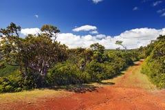 Garganta negra del río del parque. Isla Mauricio Imagen de archivo