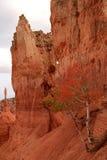 Garganta NP de Bryce Fotos de Stock Royalty Free