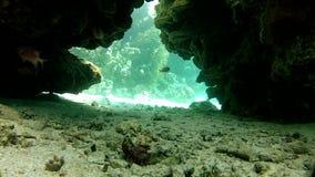 Garganta, os corais e as cavernas Peixes exóticos bonitos filme