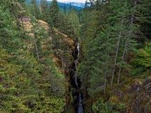 Garganta profunda Mt Rainier National Park imagen de archivo libre de regalías