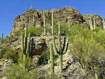 Garganta Tucson o Arizona de Sabino Imagem de Stock Royalty Free