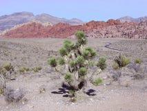 Garganta vermelha da rocha - área nacional da conservação fotos de stock royalty free