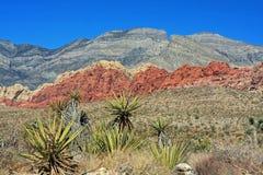 Garganta vermelha da rocha em Las Vegas Fotografia de Stock Royalty Free