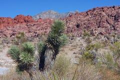 Garganta vermelha da rocha em Las Vegas Fotos de Stock Royalty Free