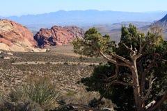 Garganta vermelha da rocha em Las Vegas Foto de Stock Royalty Free