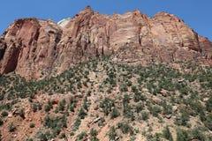 Garganta vermelha em Dixie National Forest Utah fotografia de stock royalty free