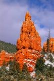 Garganta vermelha na floresta nacional de Dixie fotos de stock royalty free