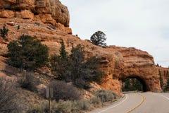 Garganta vermelha na floresta nacional de Dixie fotos de stock