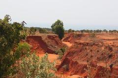 Garganta vermelha no deserto médio imagem de stock
