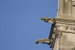 Gargoyle on Cathedral of Amiens. Gargoyle on cathedral Notre Dame of Amiens in Somme,Picardy region of France royalty free stock photo