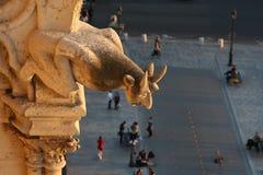 Gargoyle de Notre Dame que olha abaixo da rua Fotos de Stock Royalty Free