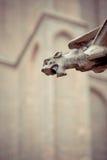 Gargoyle em uma igreja de Bruges Fotos de Stock Royalty Free