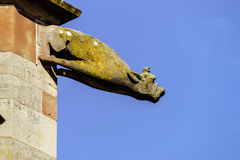 Gargoyle on a gothic cathedral, detail of a tower on blue sky ba Stock Photo