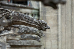Gargoyle on Gothic cathedral of Saint Gatien in Tours, Stock Image