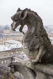 Gargoyle Of Notre Dame Cathedral Royalty Free Stock Photos