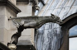 Gargoyle in Saint Germain l'Auxerrois church Royalty Free Stock Image