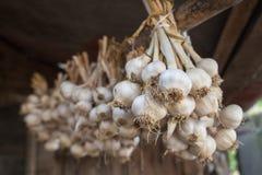 Garic в пачках высушило под сельской крышей дома Стоковые Фотографии RF