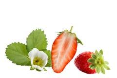 Gariguette français aimé d'isolement de fraises Collection de fruits entiers et coupés de fraise d'isolement sur le blanc Photographie stock