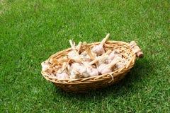 Garilc en una cesta Foto de archivo libre de regalías