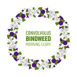 Garland with bindweed flowers. Element for design wreath morning-glory. convolvulus blossom pattern.  royalty free illustration