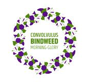 Garland with blue bindweed flowers. Element for design wreath morning-glory. convolvulus blossom pattern.  vector illustration