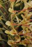 Garland Flower Stock Photos