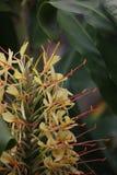 Garland Flower Stock Image