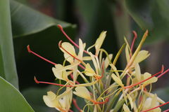 Garland Flower Stock Photography