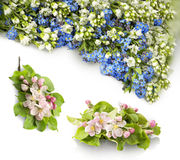 Garland of Forget-me and Baptisia on white background. Beautiful garland of tiny springtime wildflower alpine garden: cute pale cobalt Boraginaceae, light Stock Photo