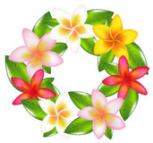 Garland Of Fragipani. Vector Stock Photo