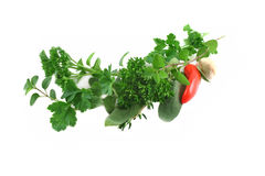 Garland Of Fresh Herbs. Straight from the herb garden Royalty Free Stock Image