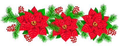 Garland Poinsettia branch fir red berries holly. Garland fresh Poinsettia branch fir red berries holly Royalty Free Stock Photography