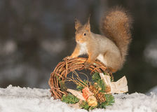 Garland hold. Red squirrel standing and a garland on snow Royalty Free Stock Images