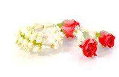 Garland jasmine Royalty Free Stock Photo